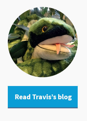 Follow Travis, the travelling snake